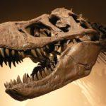 1200px Palais De La Decouverte Tyrannosaurus Rex P1050042