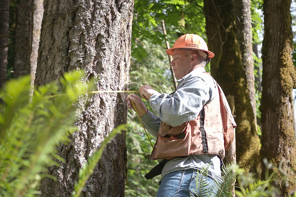 Wfpa Forestry 101 Web 10112018 1020x680